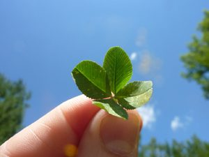 Four Leaf Clover in Hand
