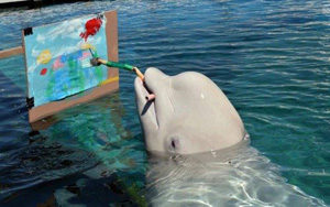 A Dolphin Painting a Picture