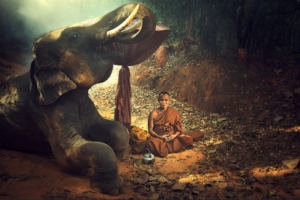 Image of a Buddhist Monk meditating with an Elephant - the symbol of Wisdom